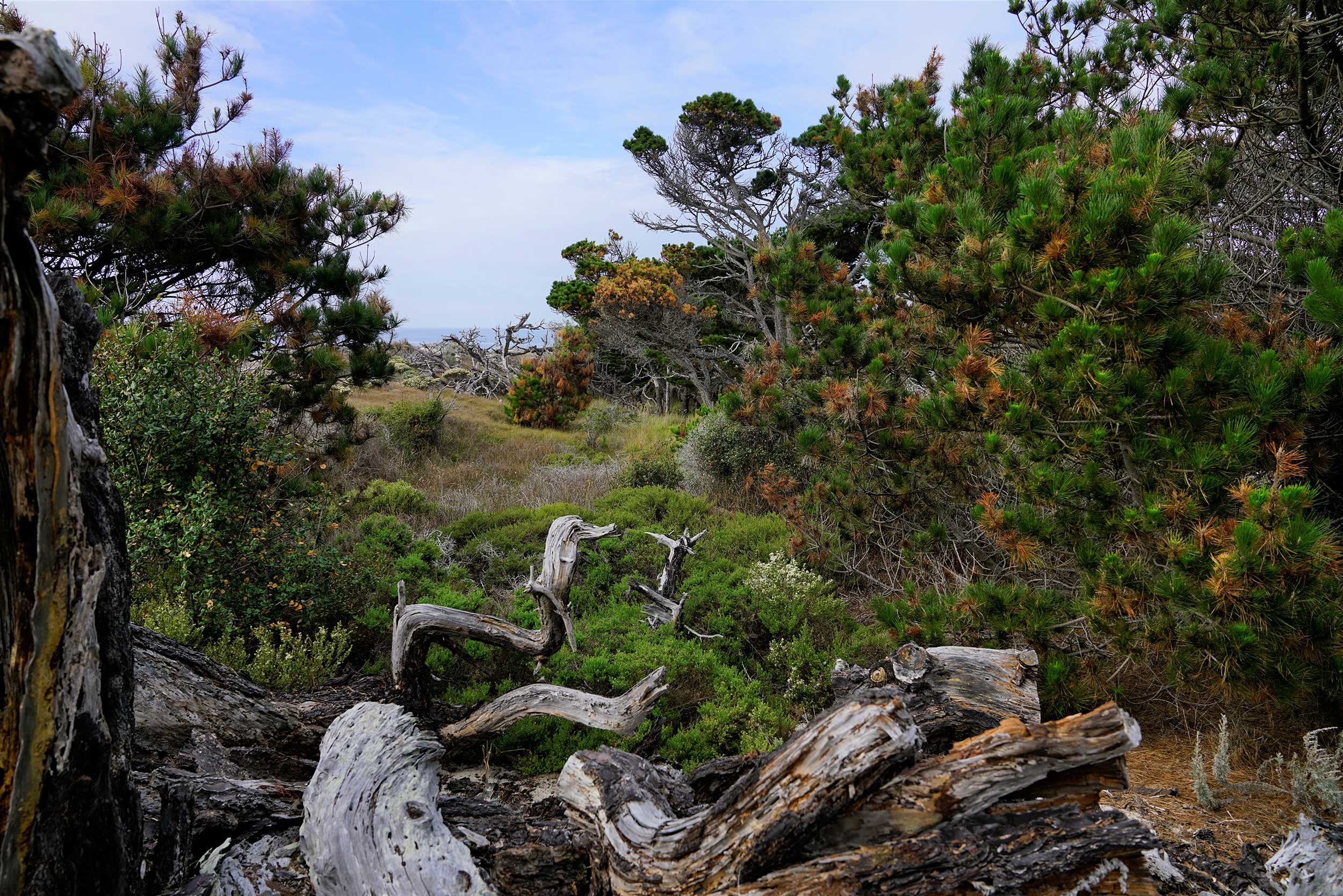 The nature surrounding AsilomarWalking down the boardwalk in Asilomar