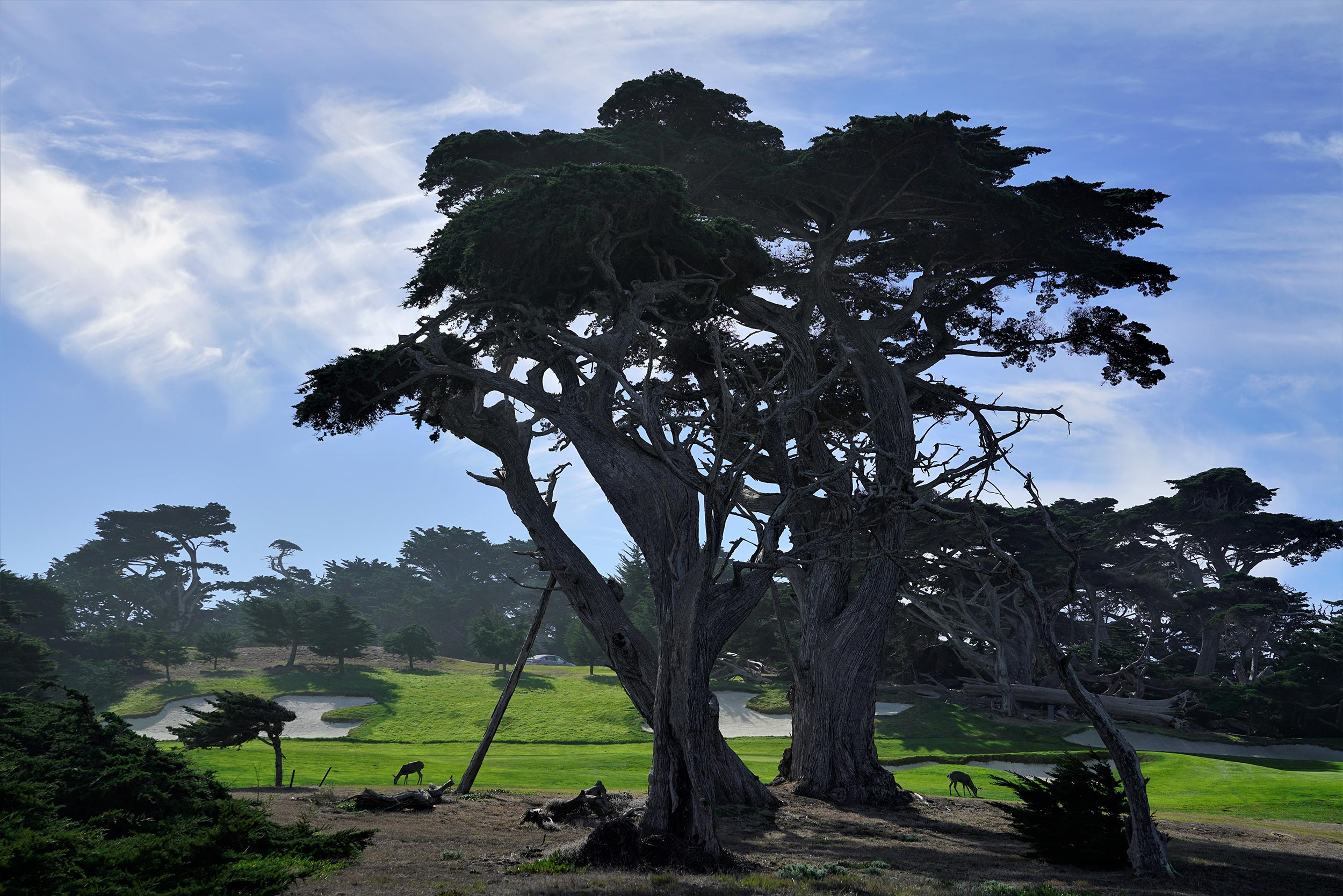 The wildlife and trees in Monterey